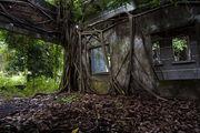 Деревья прорастают в стены / Камбоджа