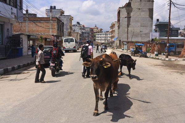 На улицах Катманду / Фото из Непала