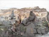 Остров de los Lobos / Аргентина