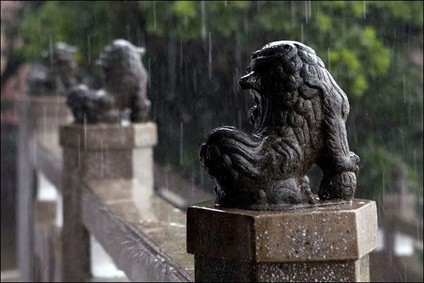 Львы в Гонконге / Фото из Гонконга