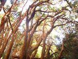 Миртовый лес / Аргентина
