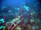 Подводный мир / Барбадос