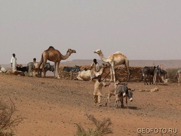 Люди, верблюды и ослы у водопоя / Фото из Судана