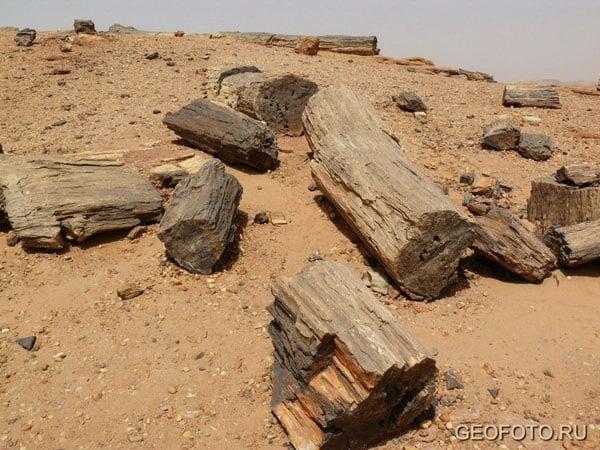 Окаменевшие деревья недалеко от Курру / Фото из Судана