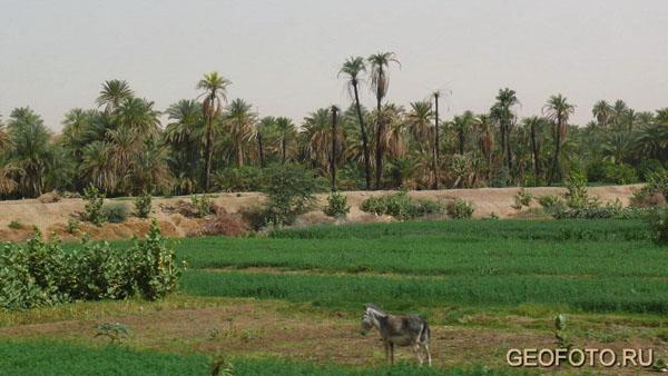 Долина Нила у Керимы / Фото из Судана