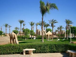 Пальмы и верблюды / Египет