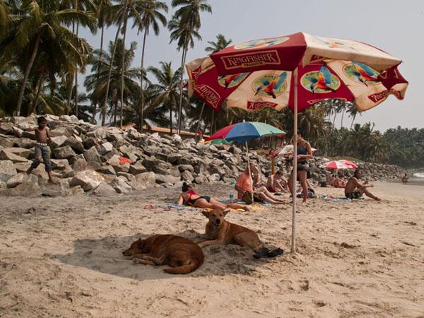 Северный пляж в Варкале: собачкам тоже нравится тень под зонтиками / Фото из Индии