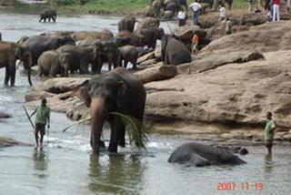 Государственный питомник для слонов / Шри-Ланка