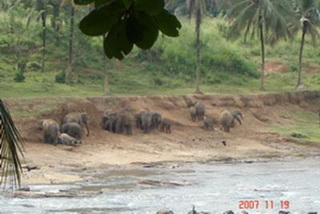 Отвесный берег / Шри-Ланка