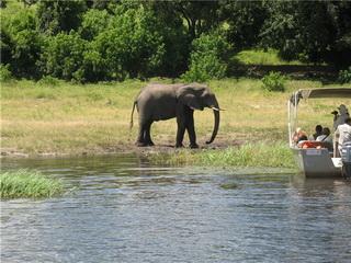 Национальный парк Чобе / Ботсвана