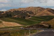 Виноградики / Новая Зеландия