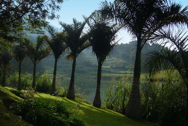 Природа Уганды / Фото из Конго (бывш. Заир)