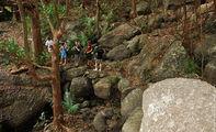 Пробираться через джунгли / Фиджи