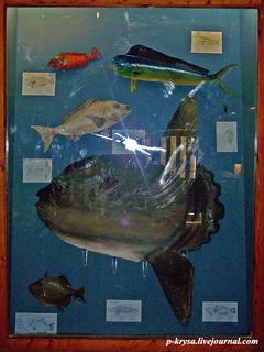 Подводный мир / Мальта