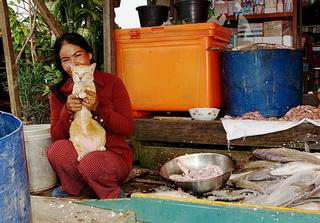 Кошакам здесь раздолье / Камбоджа