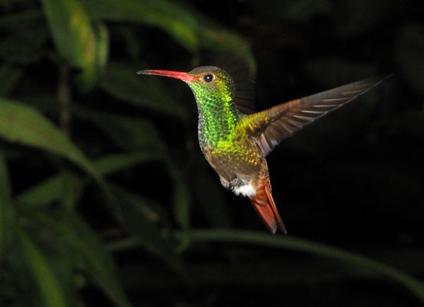 Колибри в Эквадоре / Фото из Эквадора