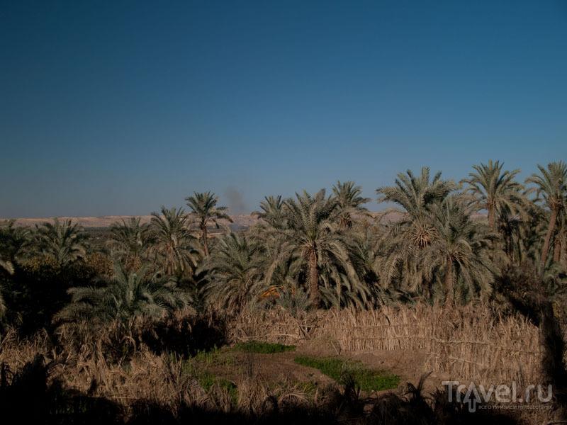 Вид на пальмовый сад в Фарафре из отеля Old Oasis / Фото из Египта
