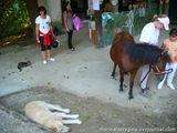 Лошади, ослы, кошки и прочая живность / Греция