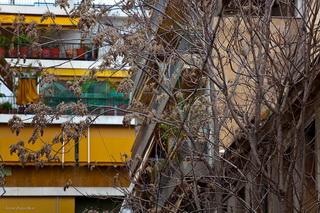 На ветвях пока пусто / Греция