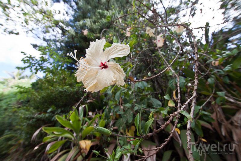 Цветок с острова Питкэрн / Фото с Питкэрна