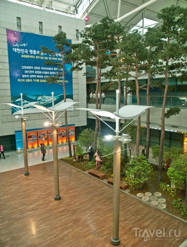 Живые деревья в аэропорту Incheon / Фото из Южной Кореи