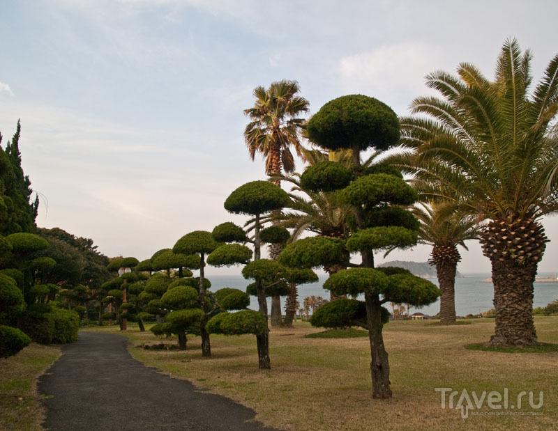 В парке вокруг Seogwipo KAL / Фото из Южной Кореи