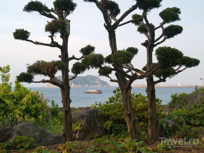 На берегу острова Чеджудо / Фото из Южной Кореи