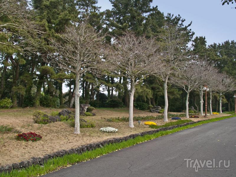 Изящный парк около отеля Seogwipo KAL / Фото из Южной Кореи