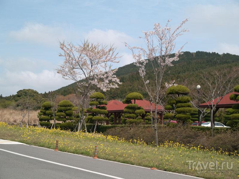 Парк возле музея Korean Air / Фото из Южной Кореи