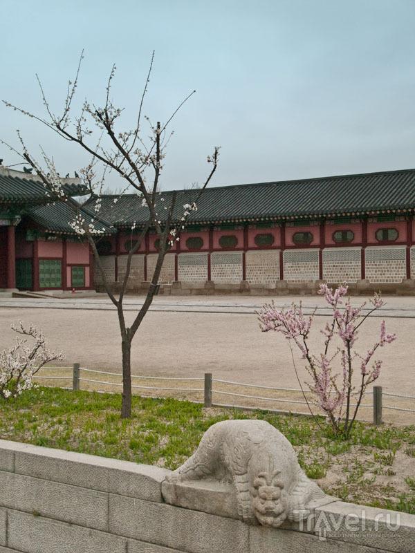 Перед воротами Heungnyemun  в Кёнбоккуне / Фото из Южной Кореи