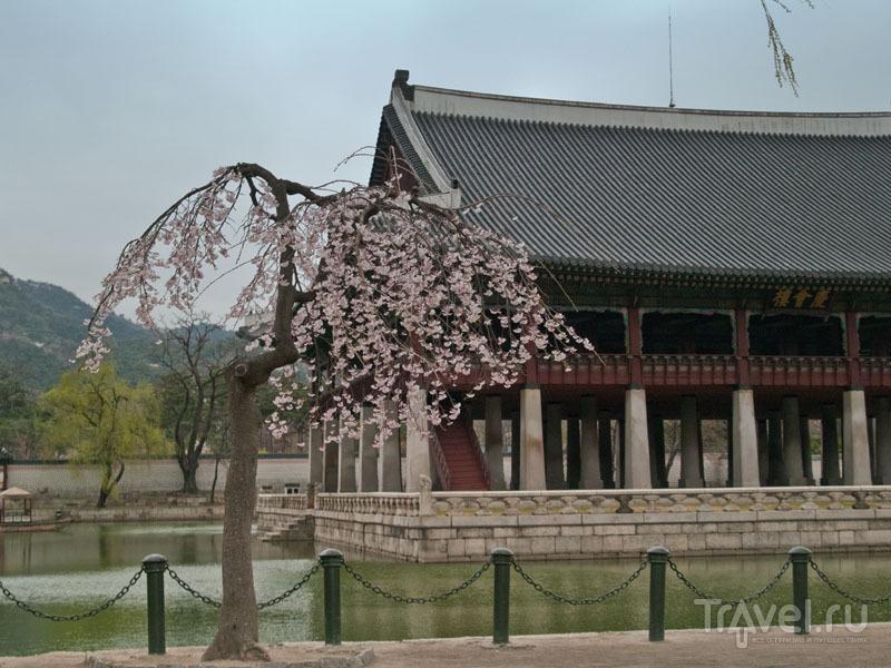 Павильон Gyeonghoeru, дворец Кёнбоккун / Фото из Южной Кореи