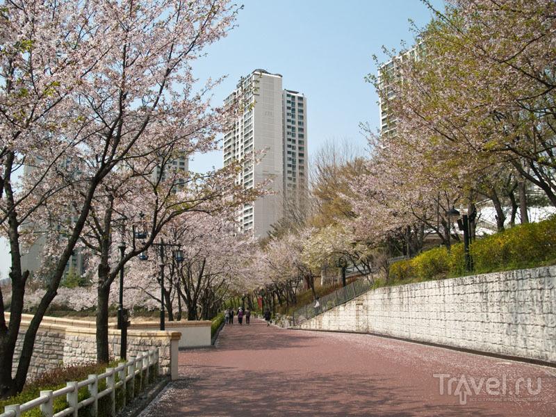 Цветение сакуры вокруг Lotte World / Фото из Южной Кореи