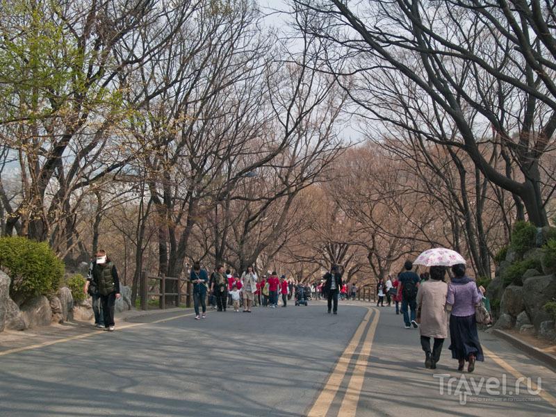 Дорога на вершину Намсан / Фото из Южной Кореи