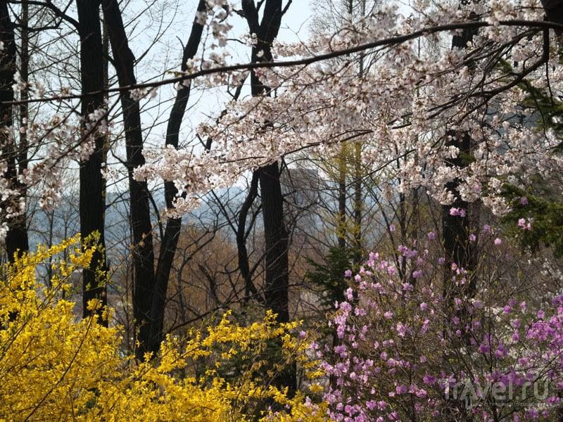 Разноцветные цветения на горе Намсан / Фото из Южной Кореи