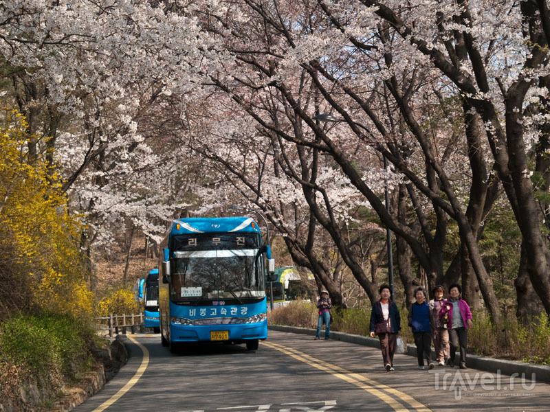 Автобусы и люди на дороге к вершине Намсан / Фото из Южной Кореи