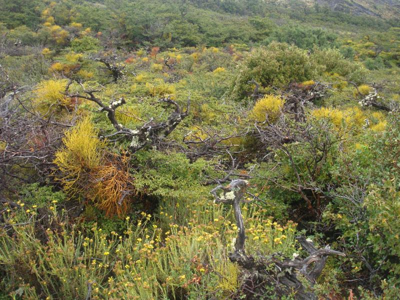 Кустарники чилийской Патагонии / Фото из Чили