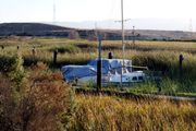 Заросшие травой лодки / США