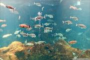 аквариум / Греция