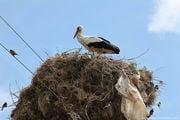 гнездо / Болгария