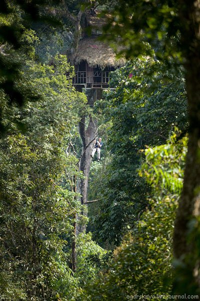 Еще один дом на дереве в джунглях Лаоса / Фото из Лаоса