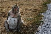 животное / Камбоджа