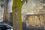 старые деревья / Германия