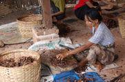 фрукт-овощ / Мьянма