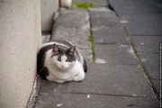 кошки / Исландия