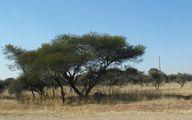 Дерево / ЮАР