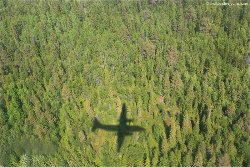 Лес Соловецких островов с самолета / Фото из России