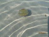медузы / Испания