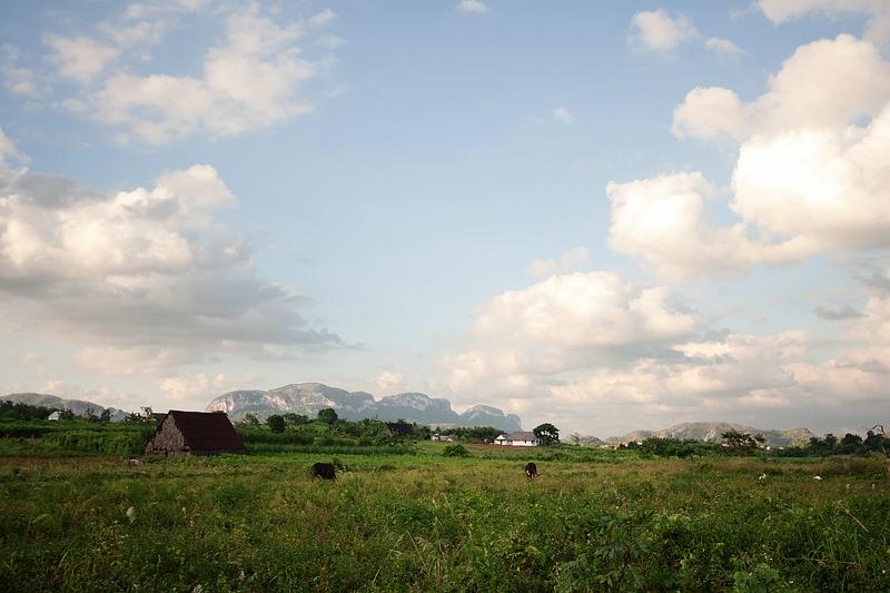 В полях на Кубе / Фото с Кубы