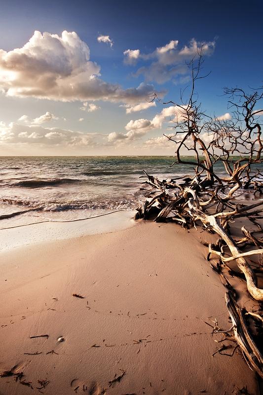 Засохшие деревья на кубинском побережье / Фото с Кубы
