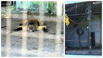 зоопарк  / Гайана